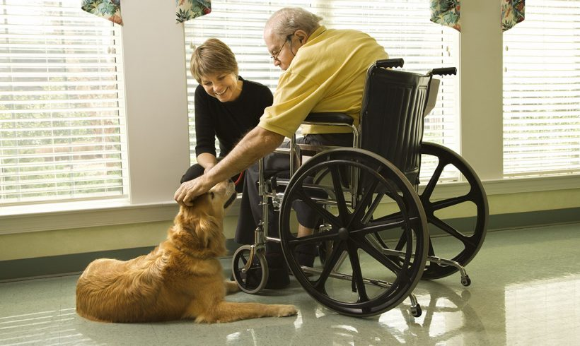 Tips for Owning a Dog in Assisted Living